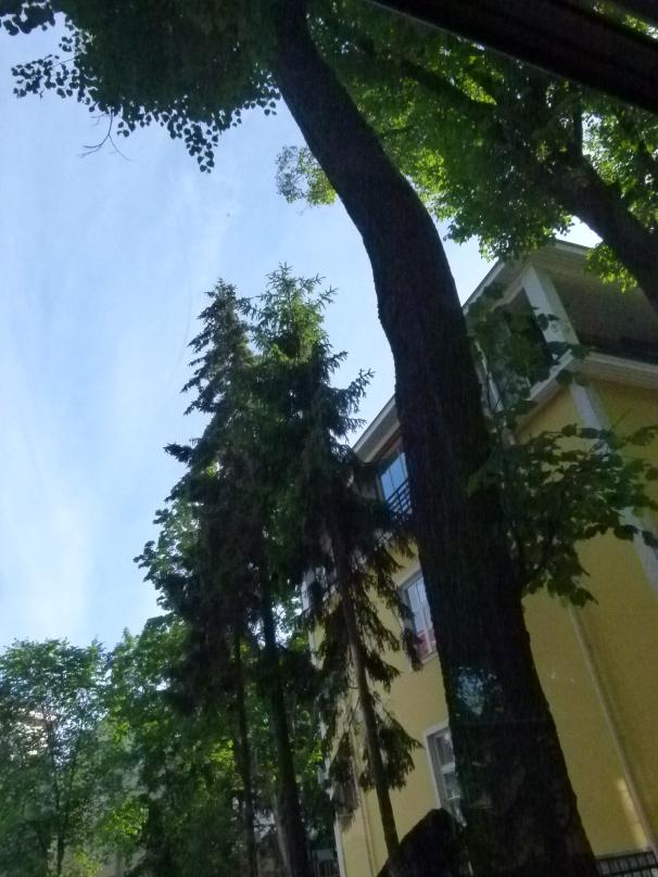 Tallinn Trees
