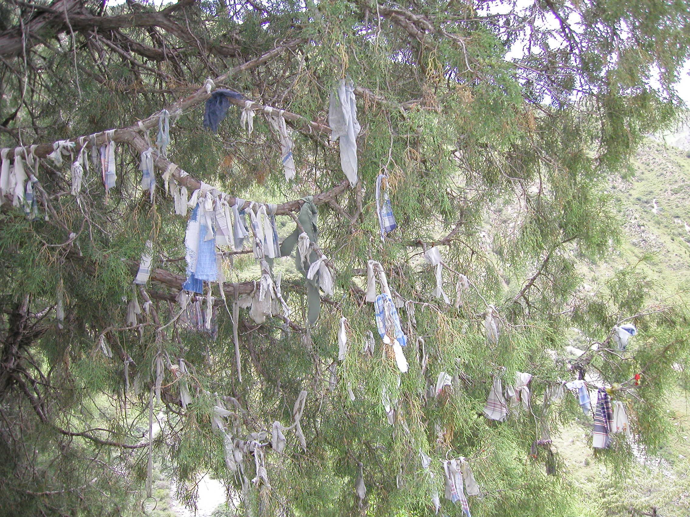 Kyrgystan:  Wish Tree in Tien Shan Mountains