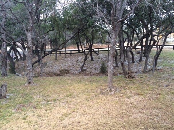Texas Hill Country: Ice Under Trees