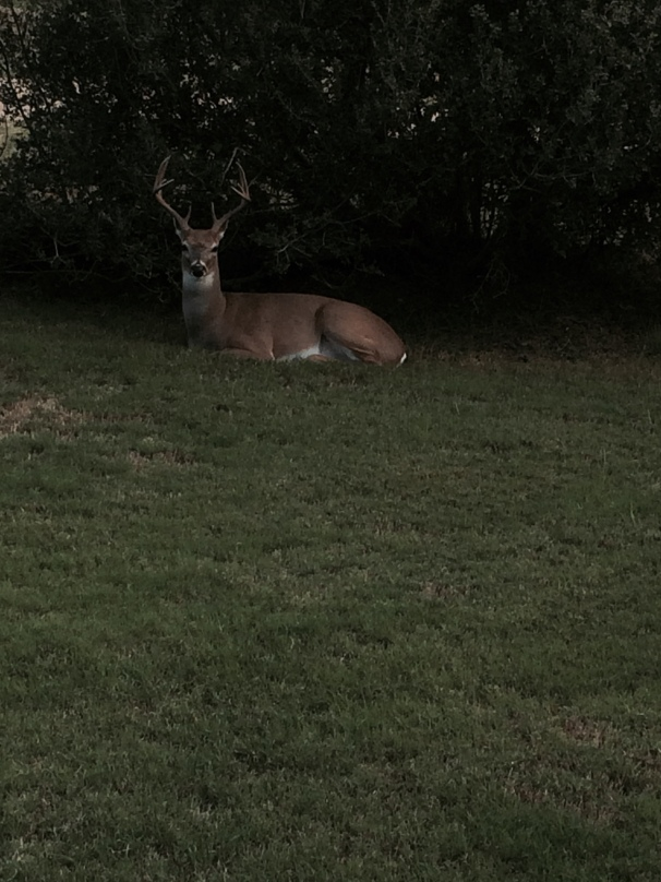 deer in front of house