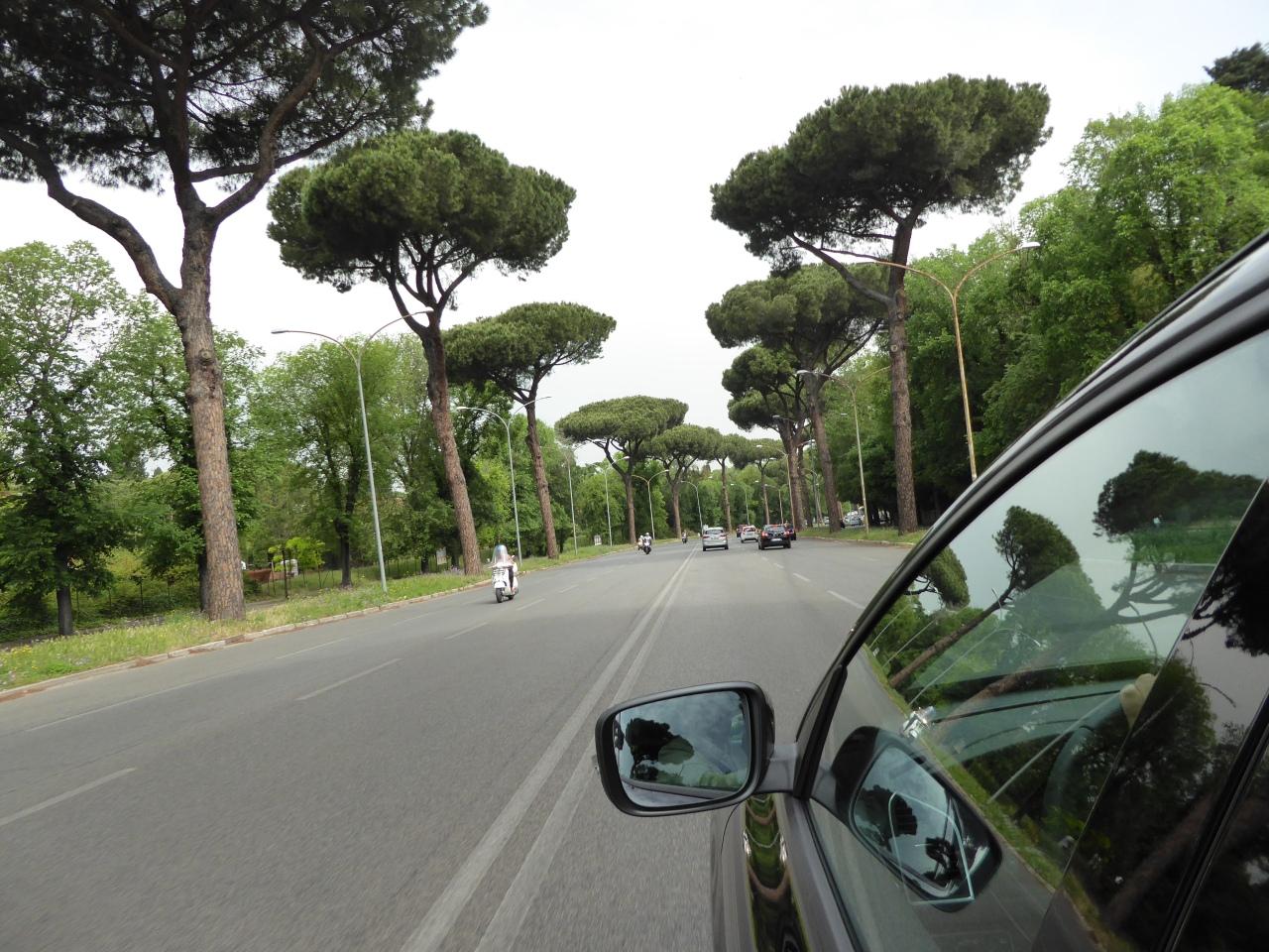 Italian Stone Pines